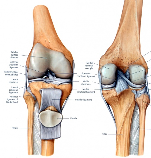 Knee Injury 101 Common Causes And What You Can Do About It Today